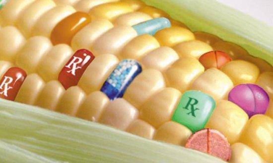 Các phương pháp nhận biết GMOs và cấu trúc phân tử GMOs