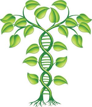 Hạnh phúc gia đình thời… giám định ADN