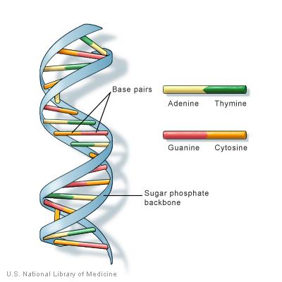 Lập bản đồ gen đầu tiên của phân tử 5hmC trong tế bào gốc phôi người