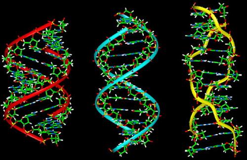 Phá án bằng phương pháp giám định gen (ADN)